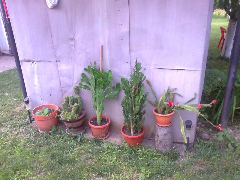 cactusii de toate felurile(ingrijirea si inmultirea lor) !!!!!! - Pagina 2 Fotogr18