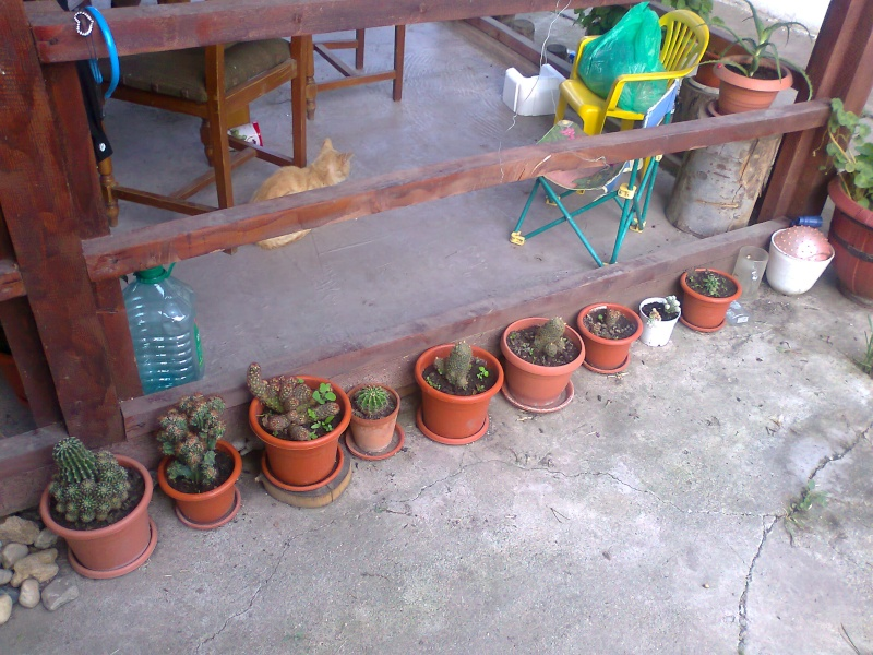 cactusii de toate felurile(ingrijirea si inmultirea lor) !!!!!! - Pagina 2 Fotogr20