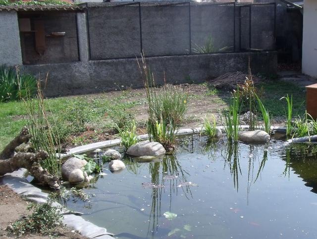 Construction d'un bassin d'environ 16000L Dscf1419