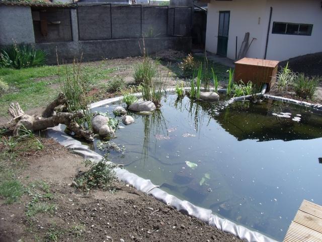 Construction d'un bassin d'environ 16000L Dscf1420