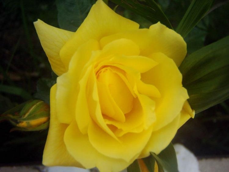 الورد روح.. الورد جمال .. الورد أنوثة  File110