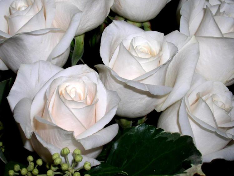 الورد روح.. الورد جمال .. الورد أنوثة  File510
