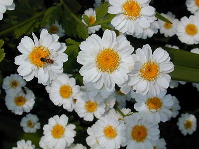 الورد روح.. الورد جمال .. الورد أنوثة  File610