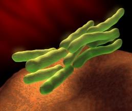 بكتيريا أي كولاي Img10