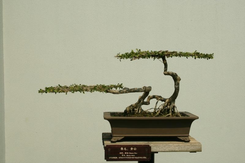 Forgotten trees ? Img_0510
