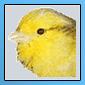 Nouveaux iconer pour notre forum 11051610