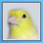Nouveaux iconer pour notre forum 11051611