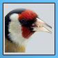 Nouveaux iconer pour notre forum 11051612