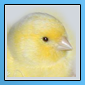 Nouveaux iconer pour notre forum 11051613