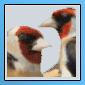 Nouveaux iconer pour notre forum 11051614