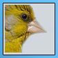 Nouveaux iconer pour notre forum 11051615