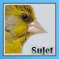 Nouveaux iconer pour notre forum 11051911