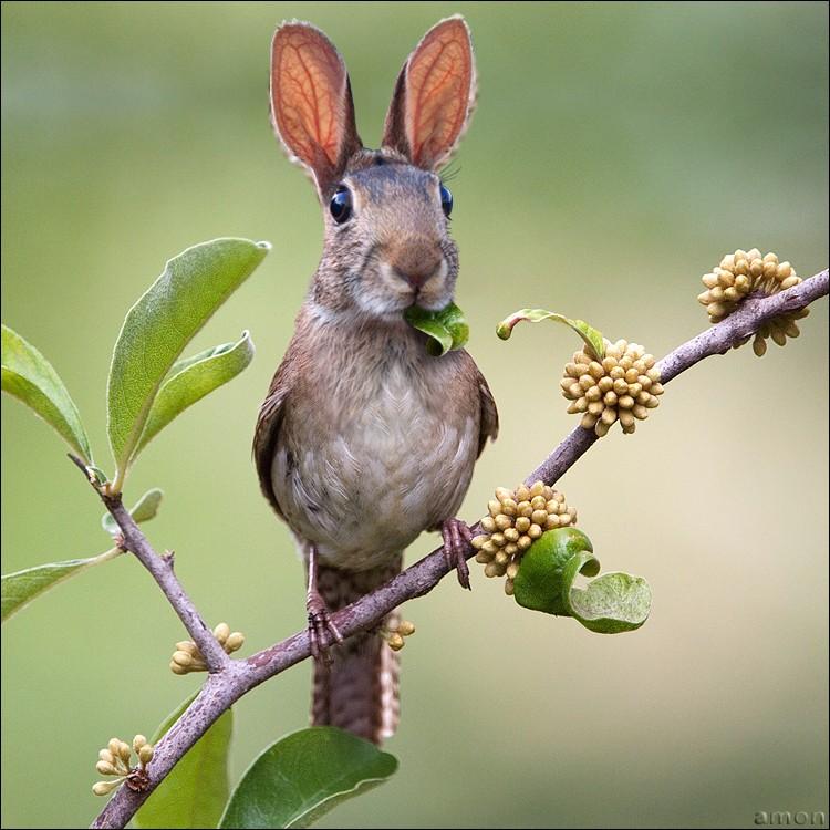 des photos de mes oiseaux 82270610