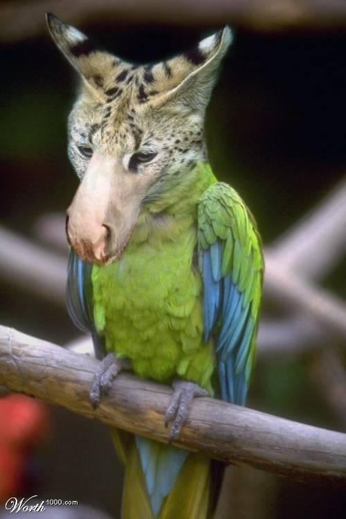 des photos de mes oiseaux Uzoo1110