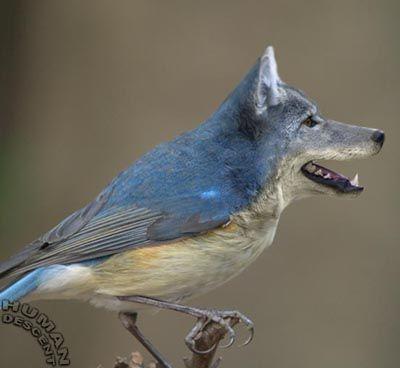 des photos de mes oiseaux Uzoo1310