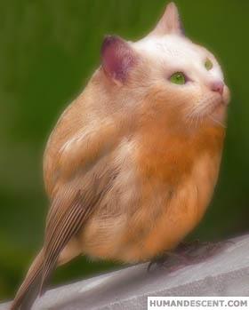 des photos de mes oiseaux Uzoo2110