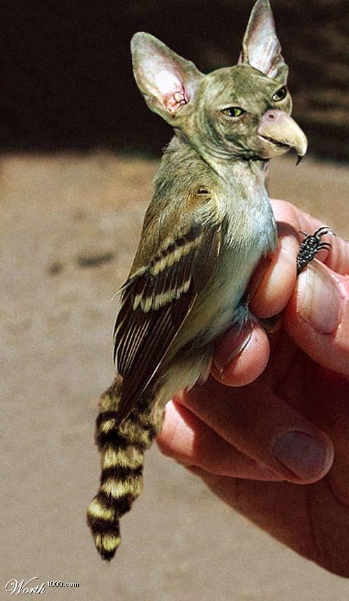 des photos de mes oiseaux Uzoo5410