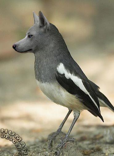 des photos de mes oiseaux Uzoo810
