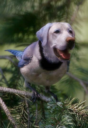 des photos de mes oiseaux Uzoo8710