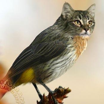 des photos de mes oiseaux Uzoo8910
