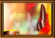 Editions Animaepsy lien sur le Net