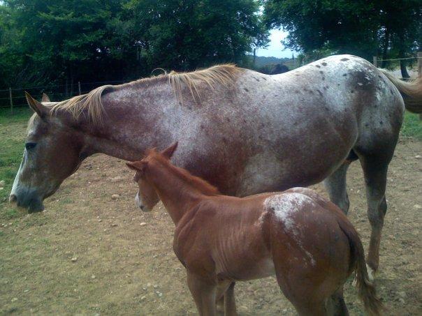 Les bébés prévues en 2012... Betsy_10