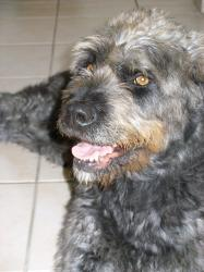 Flavie, chienne perdu à OSTWALD Mini2-10