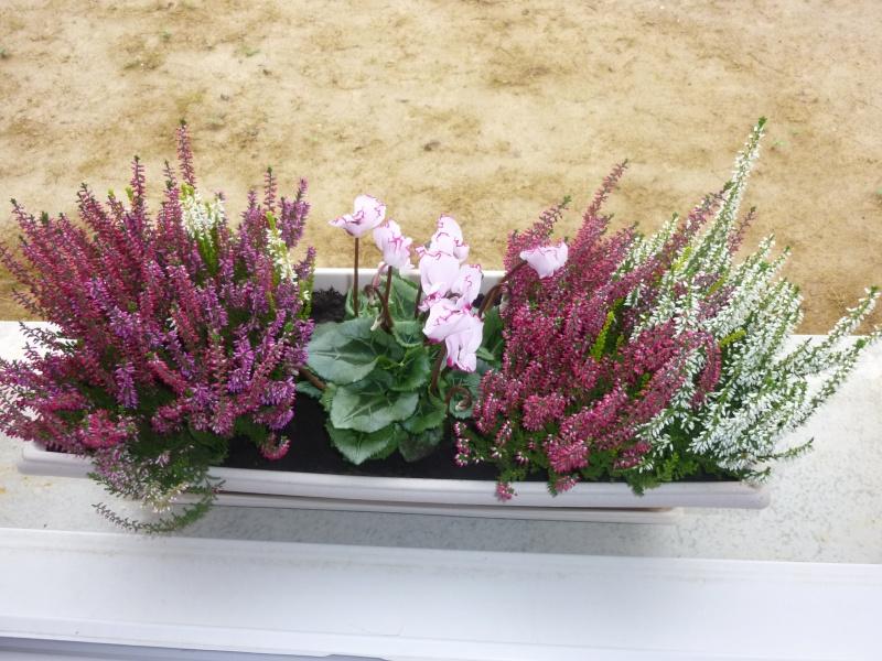 Faire une jardinière d'hiver!??? P1010415