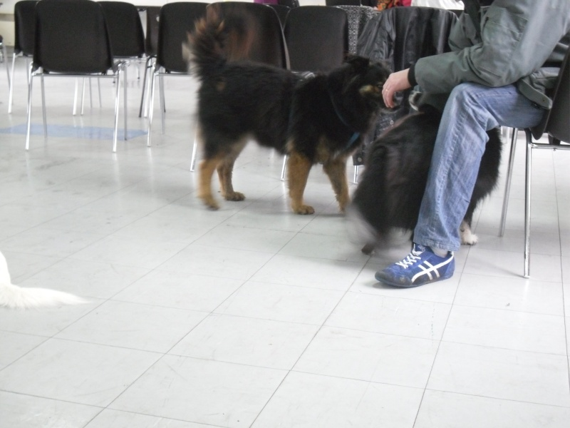 FORMATION CANINE DISPENSEE PAR CORINNE MARTIN - Page 2 Oct_1013