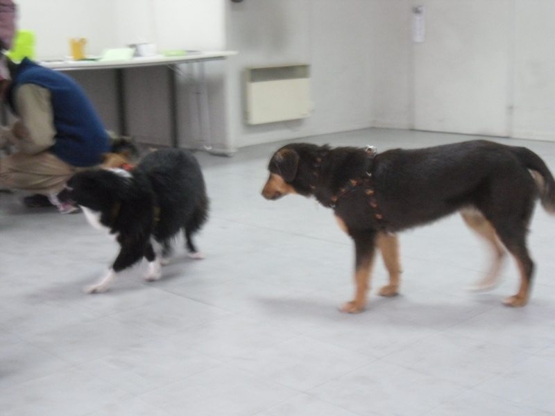 FORMATION CANINE DISPENSEE PAR CORINNE MARTIN - Page 2 Oct_1014