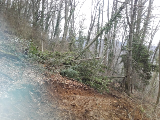 406 forestier avec treuil glogger - Page 19 20190313