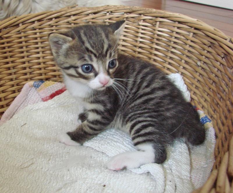 adorable petit chaton male à donner Dsc00101