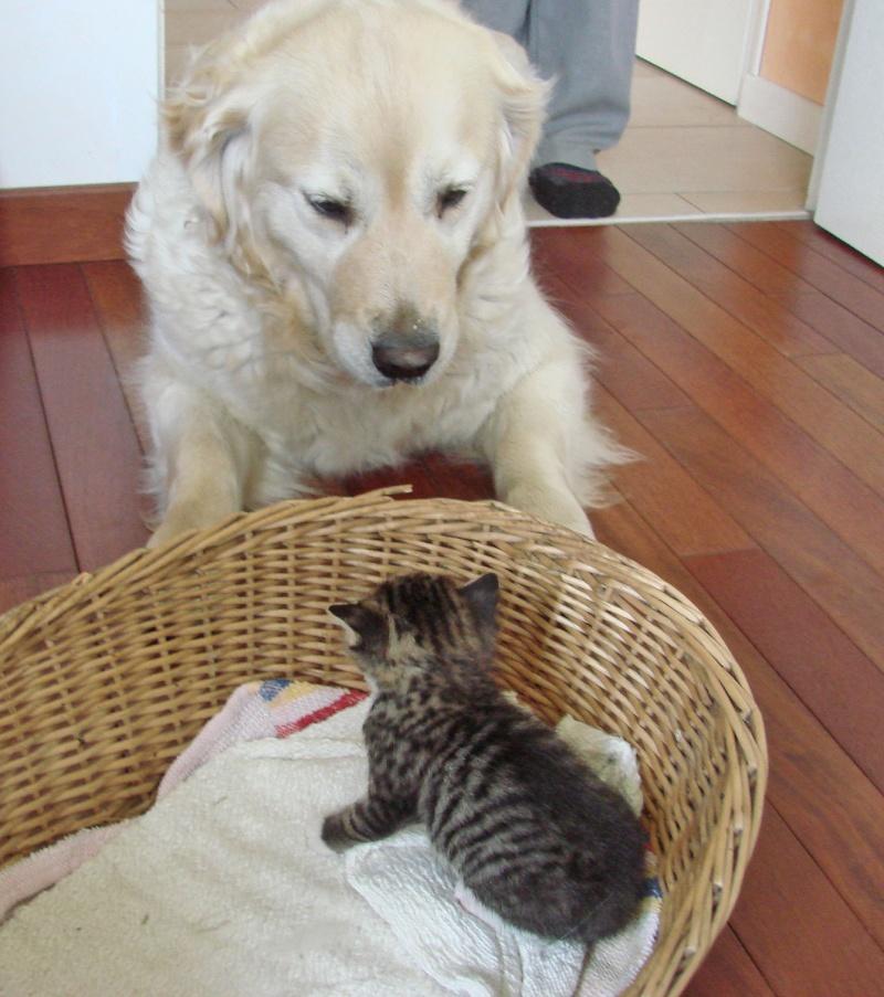 adorable petit chaton male à donner Dsc00102