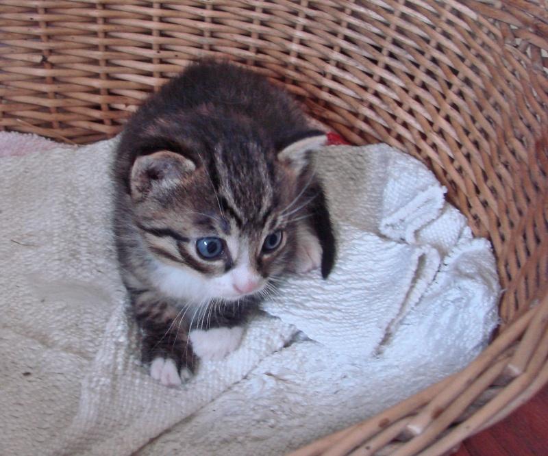 adorable petit chaton male à donner Dsc00103