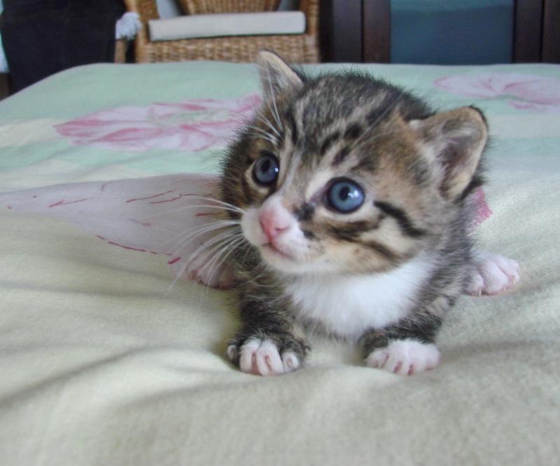 adorable petit chaton male à donner Dsc00106