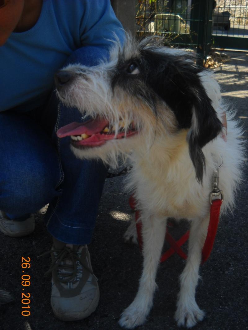 Bob, SRD, p.pequeno, muito meigo e sociável com animais 10610
