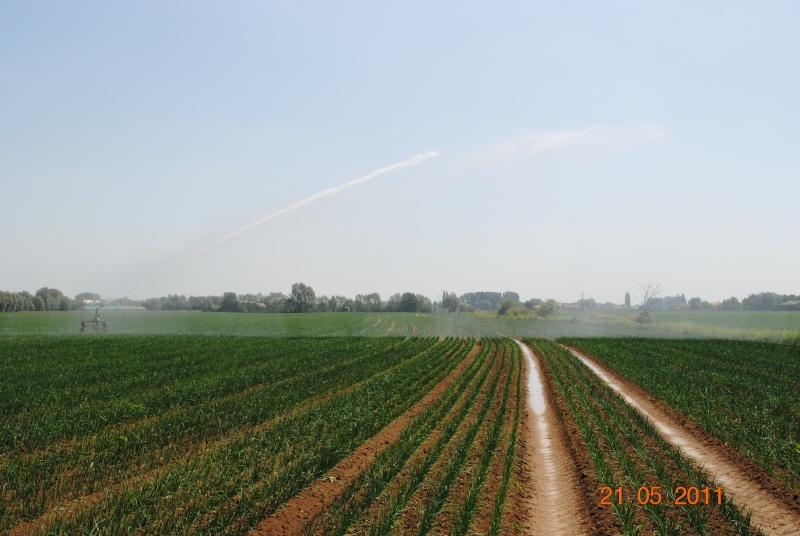 pb irrigation Cultur10
