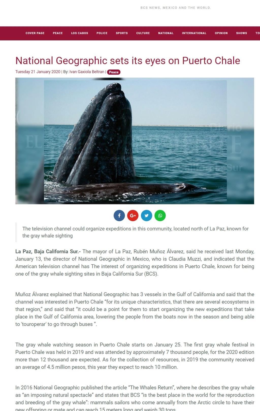 grey whales Annota15