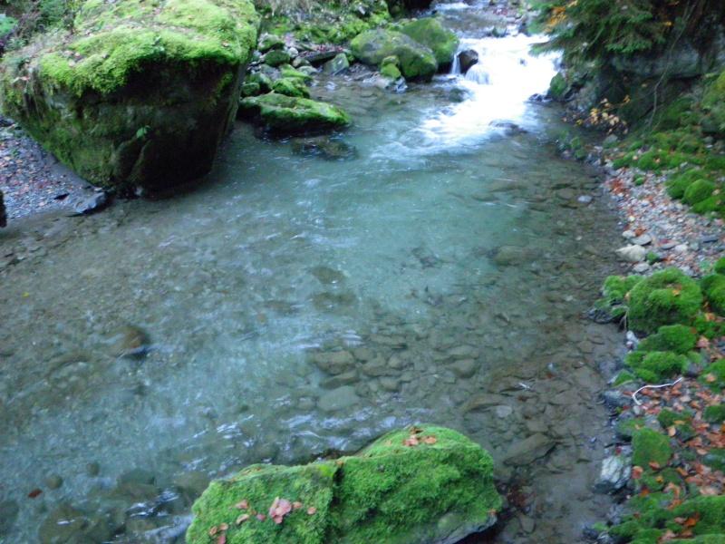 Gardons un oeil sur nos cours d'eau ! - Page 2 Imgp1510