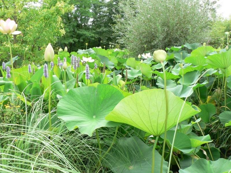 le jardin des martels dans le tarn Le_jar14