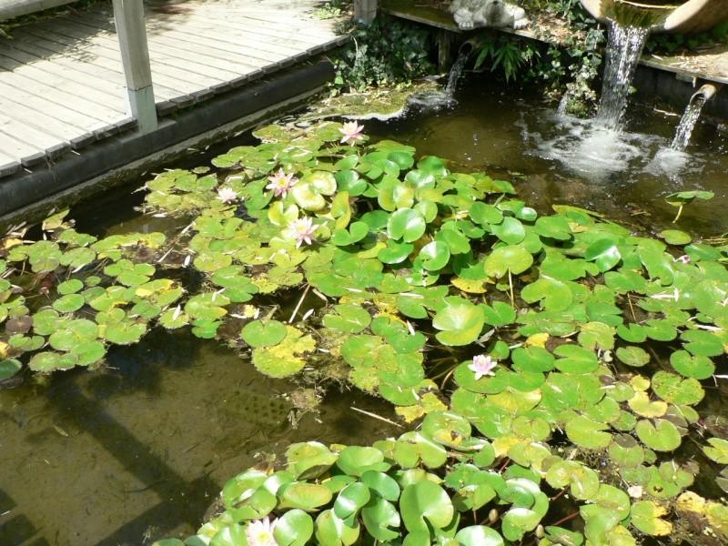le jardin des martels dans le tarn Le_jar61