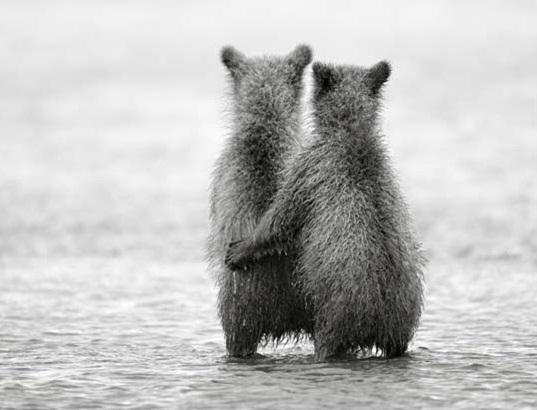 [Photos]  N&B, Sépia, ou Couleur Bear-l10