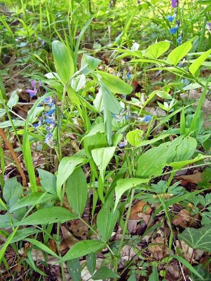 Plantes à identifier P1190113