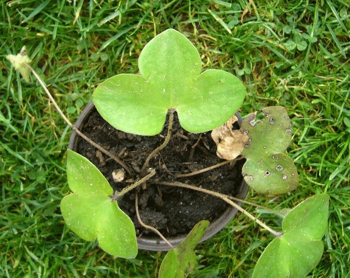 Plantes à identifier P1190210