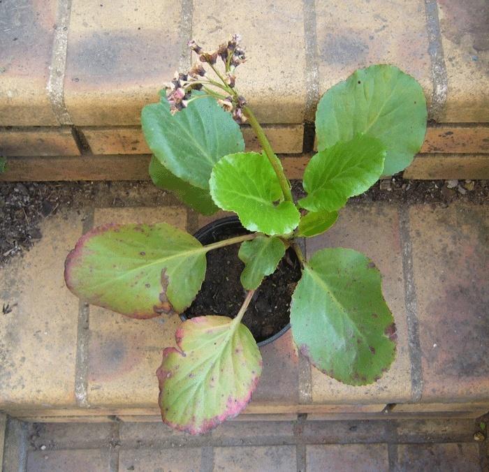 Plante à identifier, svp P1190216