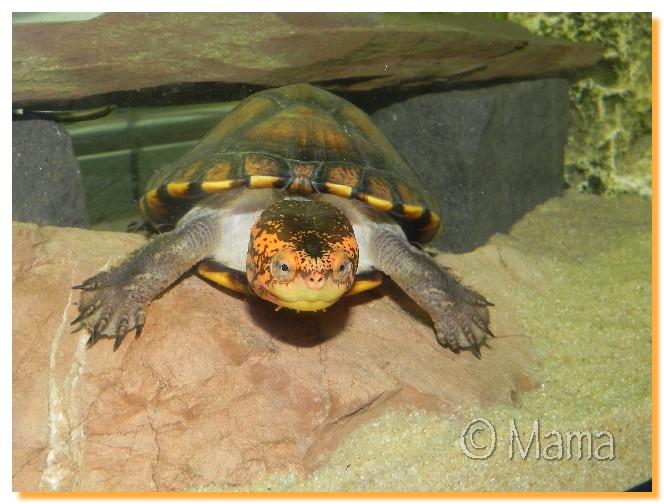 Nouvel aquarium de Speedy Aps0110