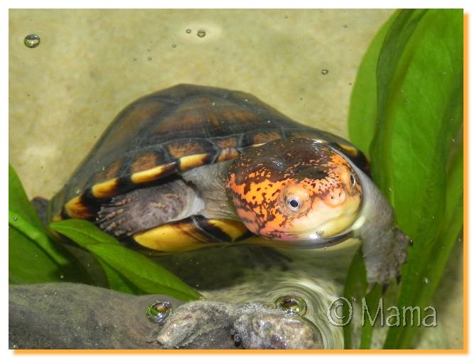 Nouvel aquarium de Speedy Aps0210