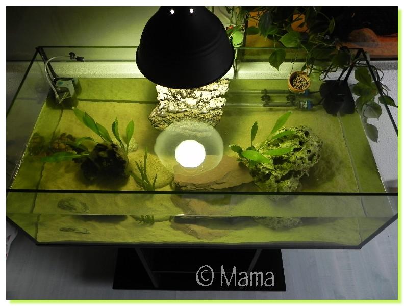 Nouvel aquarium de Speedy Aquasp11