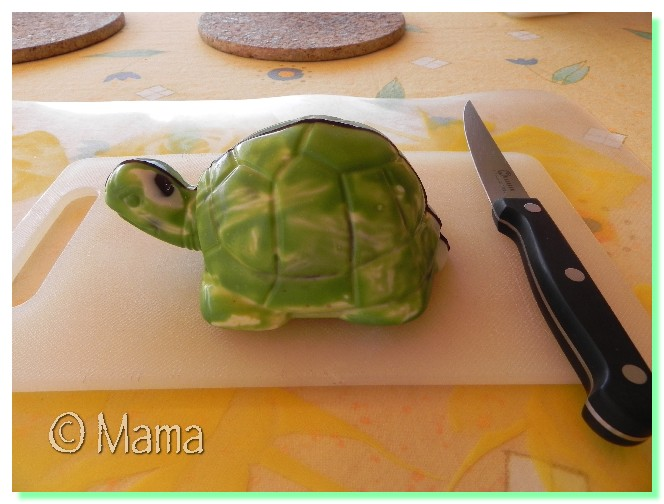 Dissection d'une tortue Paques22