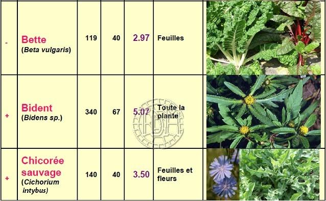 Alimentation des tortues terrestres méditerranéennes Plante11